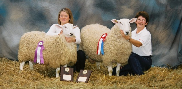 Reserve Supreme Ram (on left) & Supreme Champion Ram (on right), Maritime Fall Fair 2007
