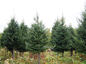 Brook Ridge Farm: Tag a Tree