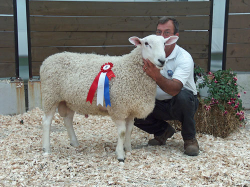 Show Ring 2006