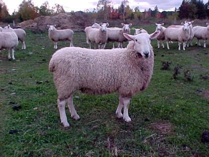 Brook Ridge Farm Sires